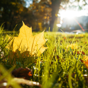 fall and winter lawn care