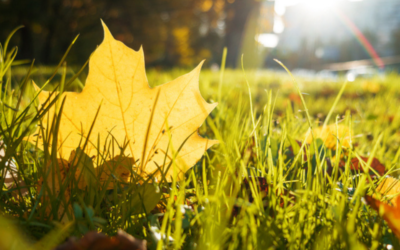 How to Prepare Your Lawn for Fall and Winter